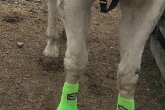 Selling: Horse boots light all colors