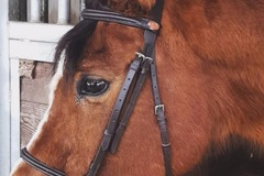 Selling: Bridle brand new leather all sizes brown and black
