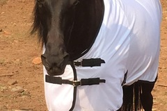 Selling: Horse fly sheet all sizes