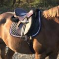 "Selling: Ansur JR Petite Konklusion Saddle 16.5"""