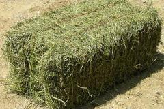 Selling: 100 Bales of Hay - Half Price