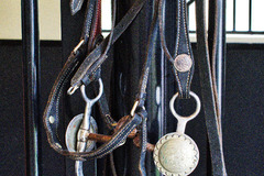 Selling: Show Bridle, Reigns, and Bit
