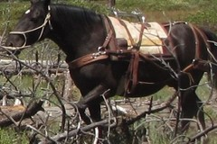 Selling: Decker Pack Saddle -PackPad-Ropes-Manties-&More.
