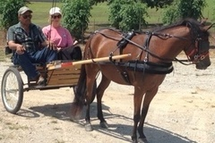Selling: Pony Cart with Cover