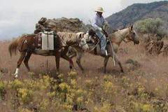 Selling: Horse Pack Sprayer (20 Gallon 12 volt) - $700 (Burns, OR)