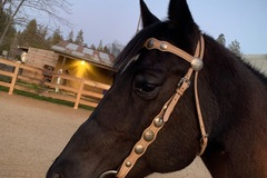 Selling: Beautiful western bridle