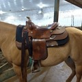 Selling: Bob's Doug Milholland Reining Saddle 16""