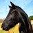 Black horse 1502874